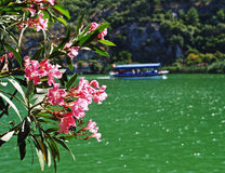 River landscape. Pink flowers and green waters of a river with a dolmus boat in the distance stock image