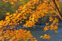 River landscape in autumn, with orange beech leaves. And flowing river below royalty free stock photo