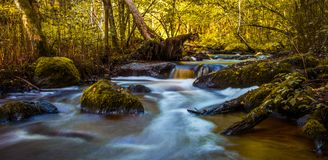 River landscape in forest Royalty Free Stock Photos