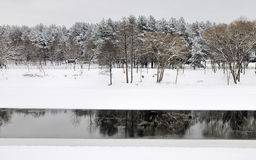River Landscape In Winter. Pine Forest Stock Image
