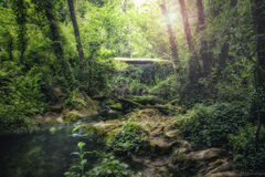 River landscape through inner jungle area Stock Photography