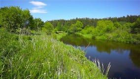 River landscape stock video