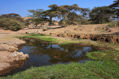 River landscape in Masai Land Royalty Free Stock Photo