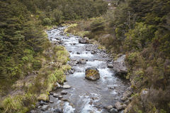 River landscape in New Zealand Stock Photography