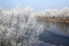The river landscape with soft rime on trees Stock Image