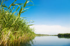 River landscape in summer sunny day Stock Photos