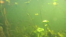 River landscape with underwater dive and little fish stock footage