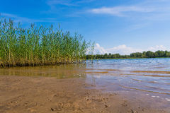 River Landscape of the Volga. The dense forest on the banks of the Volga river Royalty Free Stock Photo