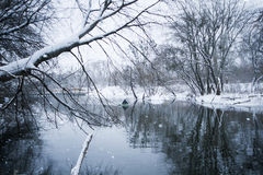 River landscape in winter Stock Photography