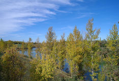 River landscape and   wood. Royalty Free Stock Image