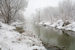 River Little Danube in winter Royalty Free Stock Images