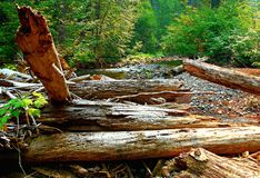 River Logs. View of the North Santiam River - near Santiam Junction, OR Stock Photo