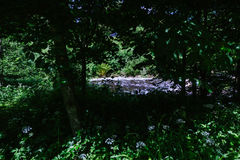 The river. A look through the forrest to see the river Royalty Free Stock Image