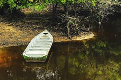 River with low water exposing the roots of a tree and a boat on. The river bank. Landscape from Pantanal in Brazil. Beautiful nature frame Royalty Free Stock Photo