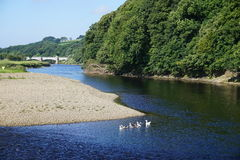 River Lune Lancashire. Looking west along the Lune valley. This is where the river swings into  the Crook O'Lune Stock Photo