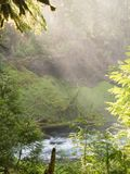 River through lush canyon Stock Image