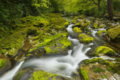 River through lush forest in Northern Ireland Stock Photography