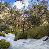 River and lush green forest near Huaraz in Cordillera Blanca, Pe Royalty Free Stock Photo