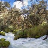 River and lush green forest near Huaraz in Cordillera Blanca, Pe Royalty Free Stock Photo