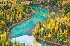 River makes turn in a autumn forest Royalty Free Stock Image