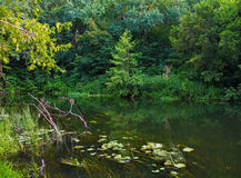 River. Mall river, greenery, water lilies, for water Stock Photography