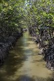 River in the mangrove at Can Gio`s Monkey Island, south Vietnam.  Stock Images