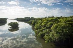 River beside mangrove Stock Photos