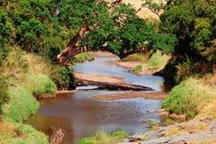 River in Masai Mara Royalty Free Stock Image