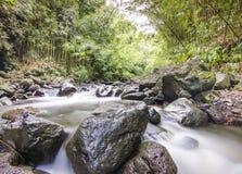 River in Maui Stock Photos