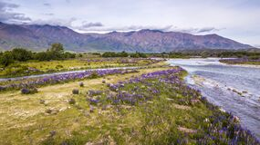 River and meadow full of purple flowers
