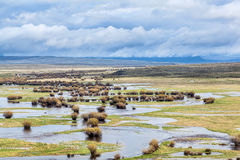 River meanders in a mountain valley. Illinois River meanders through Arapaho National Wildlife Refuge, North Park near Walden, Colorado, spring scenery with Royalty Free Stock Image