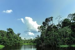River in the middle of the Amazon with abundant vegetation royalty free stock photos