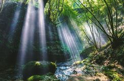 River in the Middle of Forest Sun Ray View during Day Time Stock Images