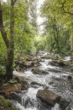 River in the middle of the woods. River and cascade in the middle of trees and plants royalty free stock image