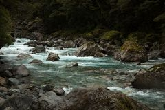 River in Milford sound in NZ. Turquoise water river in Milford sound in southern island in New Zealand royalty free stock images