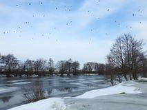 River Minija, birds and nice trees, Lithuania Stock Photo