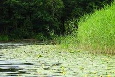 River minija, ducks birds and nice plants, Lithuania Stock Photos