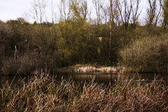 River Misbourne in the Chilterns, Eng Stock Photography