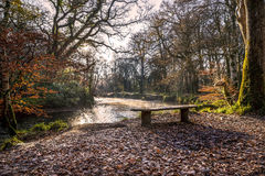 River on a misty autumn morning, respryn, cornwall, uk. Bench by the river on a misty autumn morning, respryn, cornwall, uk Royalty Free Stock Images