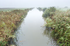 River in a misty morning rural landscape in the Netherlands Royalty Free Stock Photos