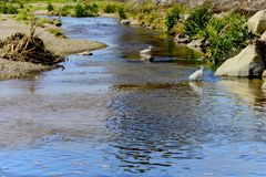 River Moorpark California Royalty Free Stock Photography