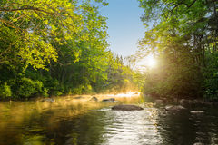 River in the morning Royalty Free Stock Images