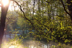 River. The river in the morning mist Stock Images