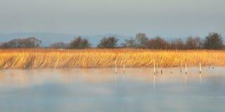 River in the morning in winter. Calm river in the morning in winter Royalty Free Stock Photos