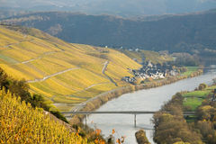 River Mosel Vineyards. A photo the Mozel area and its many vineyards and villages royalty free stock images