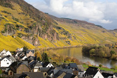River Mosel Vineyards. A photo the Mozel area and its many vineyards and villages stock images