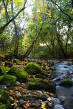 River with mossy stones. River in forest with green mossy stones stock photography