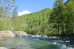 River in mountain. A river in the mountain Royalty Free Stock Photo