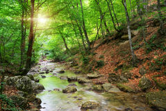 River in mountain forest. Royalty Free Stock Images