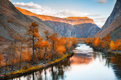 River in mountain gorge at sunset, autumn landscape. Altai, Siberia, Russia. River in mountain gorge at sunset, autumn landscape. Chulyshman river, Altai stock photo